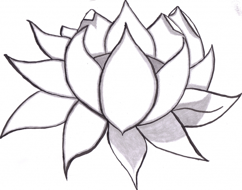 1024x803 Flowers Drawings In Pencil Step By Step