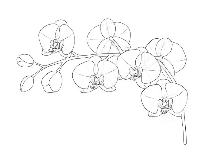 700x520 How To Draw Flowers The Sexy And Sultry Orchid