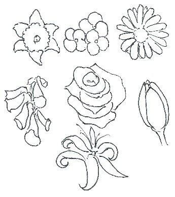 345x388 How To Draw Flowers
