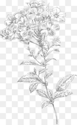 260x420 Line Drawing Of Flowers Png Images Vectors And Psd Files Free