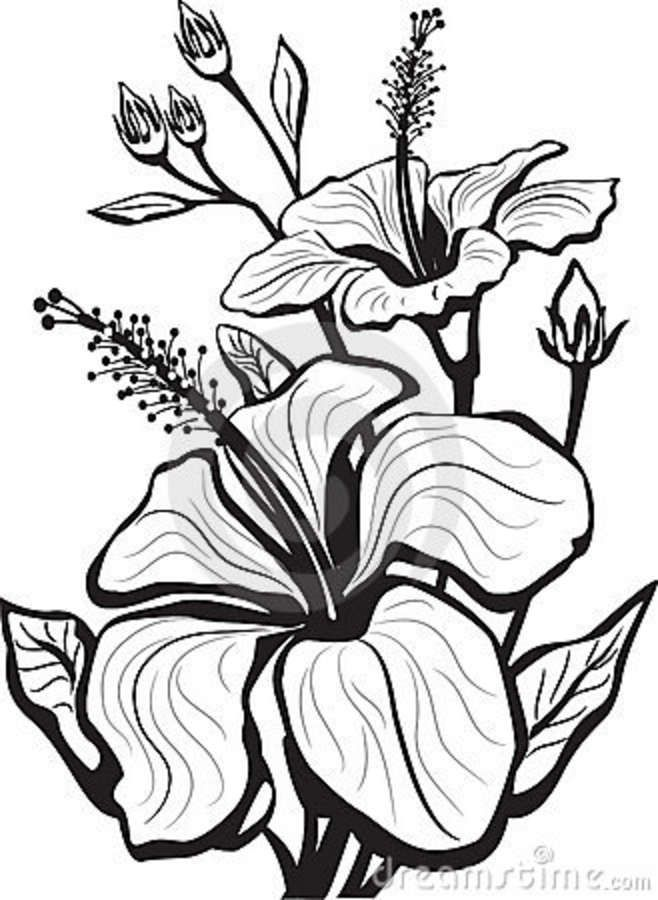 658x900 photos drawing flowers