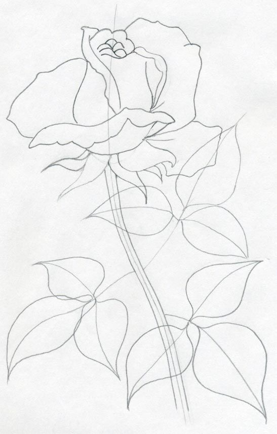 547x857 Draw A Rose Quickly, Simply And Easily Art Rose
