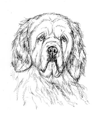 350x403 3 Different Dog Sketches Xpost