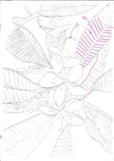 236x332 Outline Drawing Course Module Completed! Watercolour Journey By