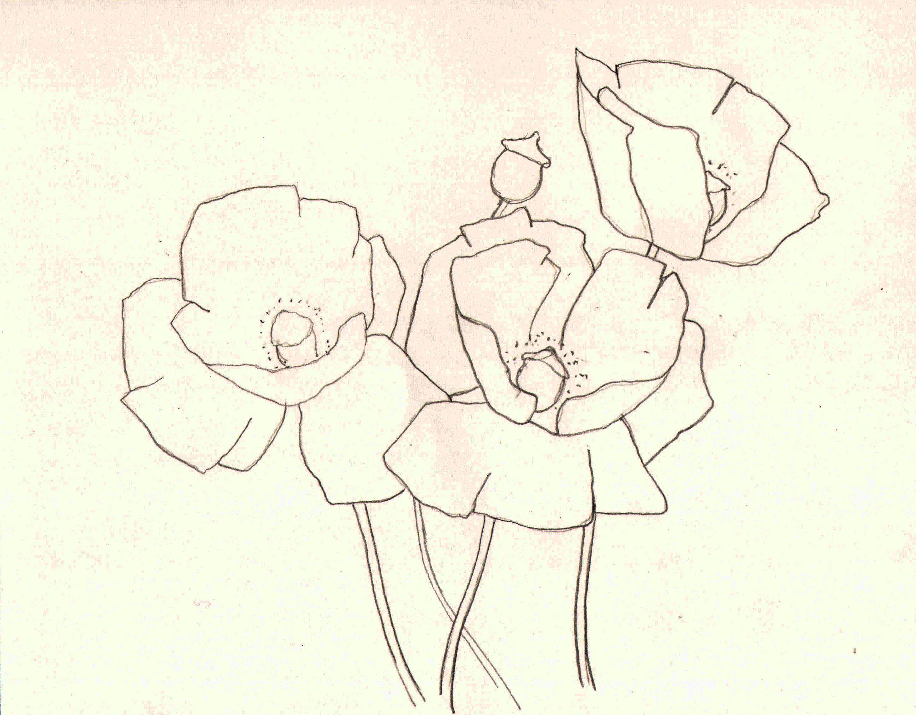 2911x2272 Simple Poppy Flower Drawing Watercolour Poppy Demo Poppies