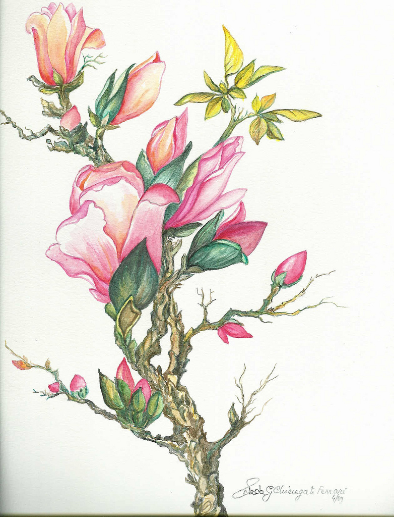 782x1024 The World's Best Photos Of Magnolia And Watercolour