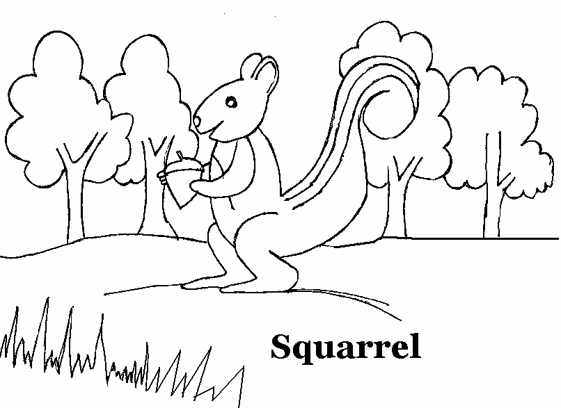 806x587 Squirrel Coloring Printable Page For Kids