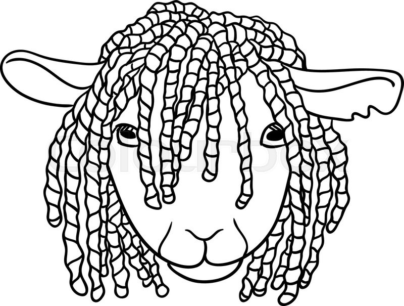800x605 Sheep With Dreadlocks, Vector Illustration On A White Background