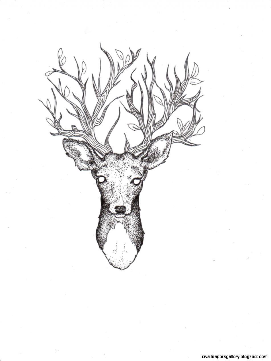 952x1265 Deer Drawing Tumblr Wallpapers Gallery