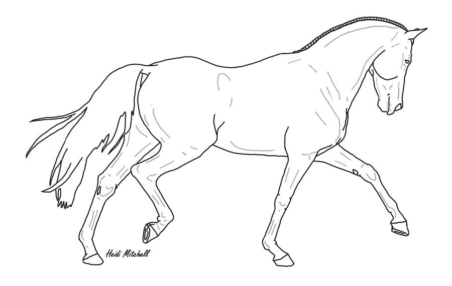 900x570 Dressage Horse Trot 3 By Threehoundsgraphics