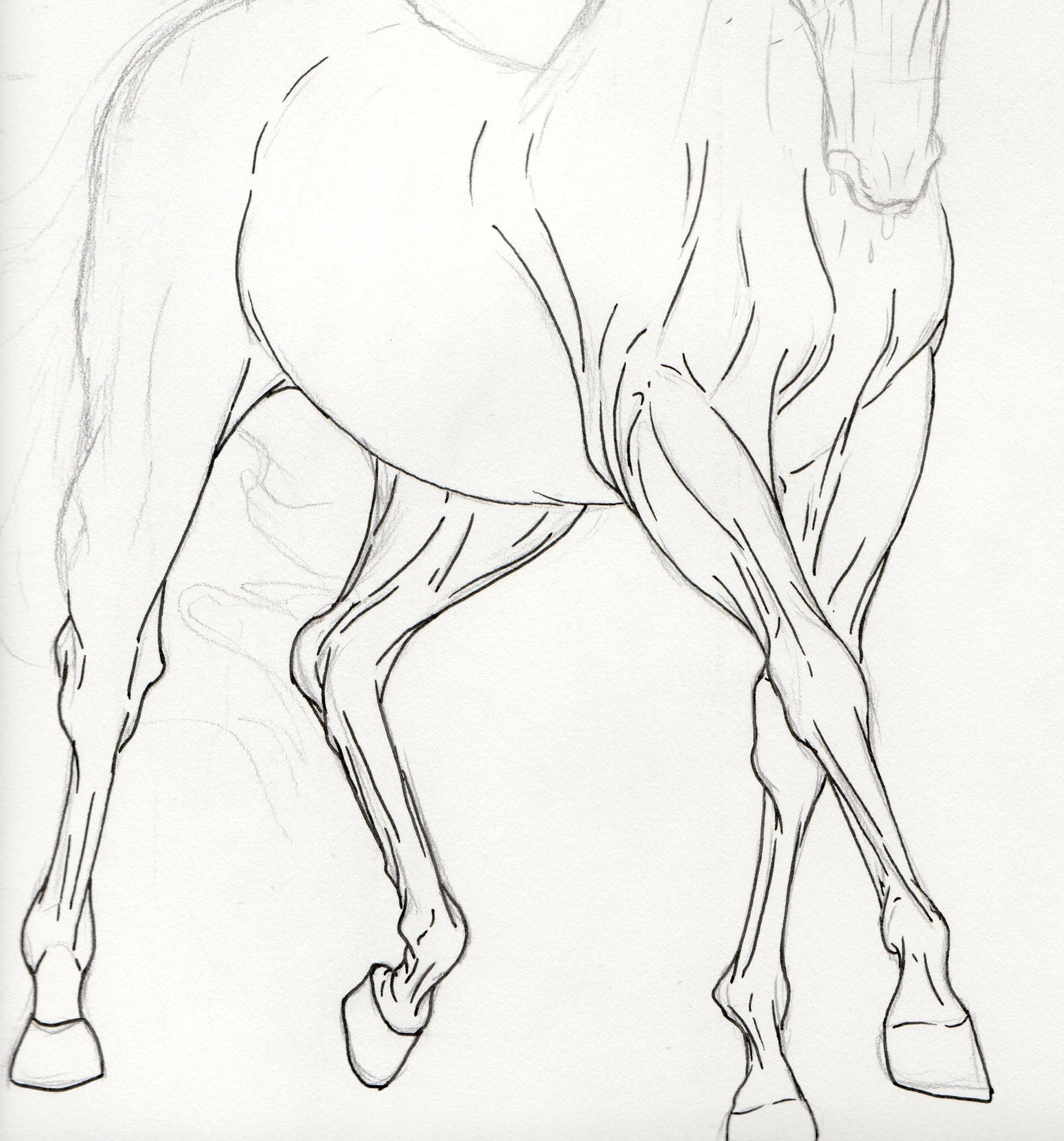 1974x2117 Dressage Legs By Stagsleap