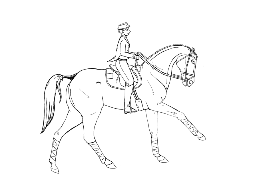 dressage horse drawing at getdrawings  free download