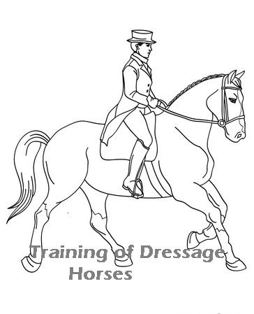 364x449 Olympic Equestrian Dressage Tickets Training Of Dressage Horses