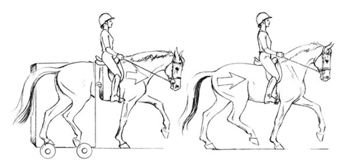 1200x572 Optimizing Your Dressage Horse's Soundness From The Saddle
