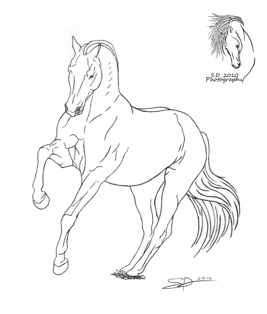 872x1024 The World's Best Photos Of Drawing And Dressage