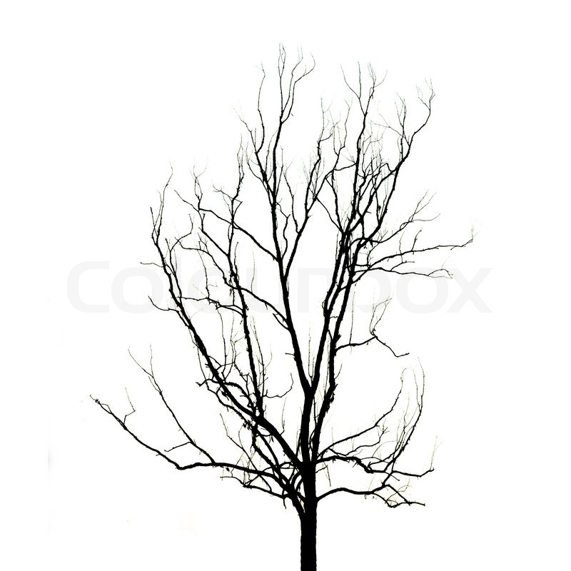 800x800 Dead Tree Without Leaves Stock Photo Colourbox