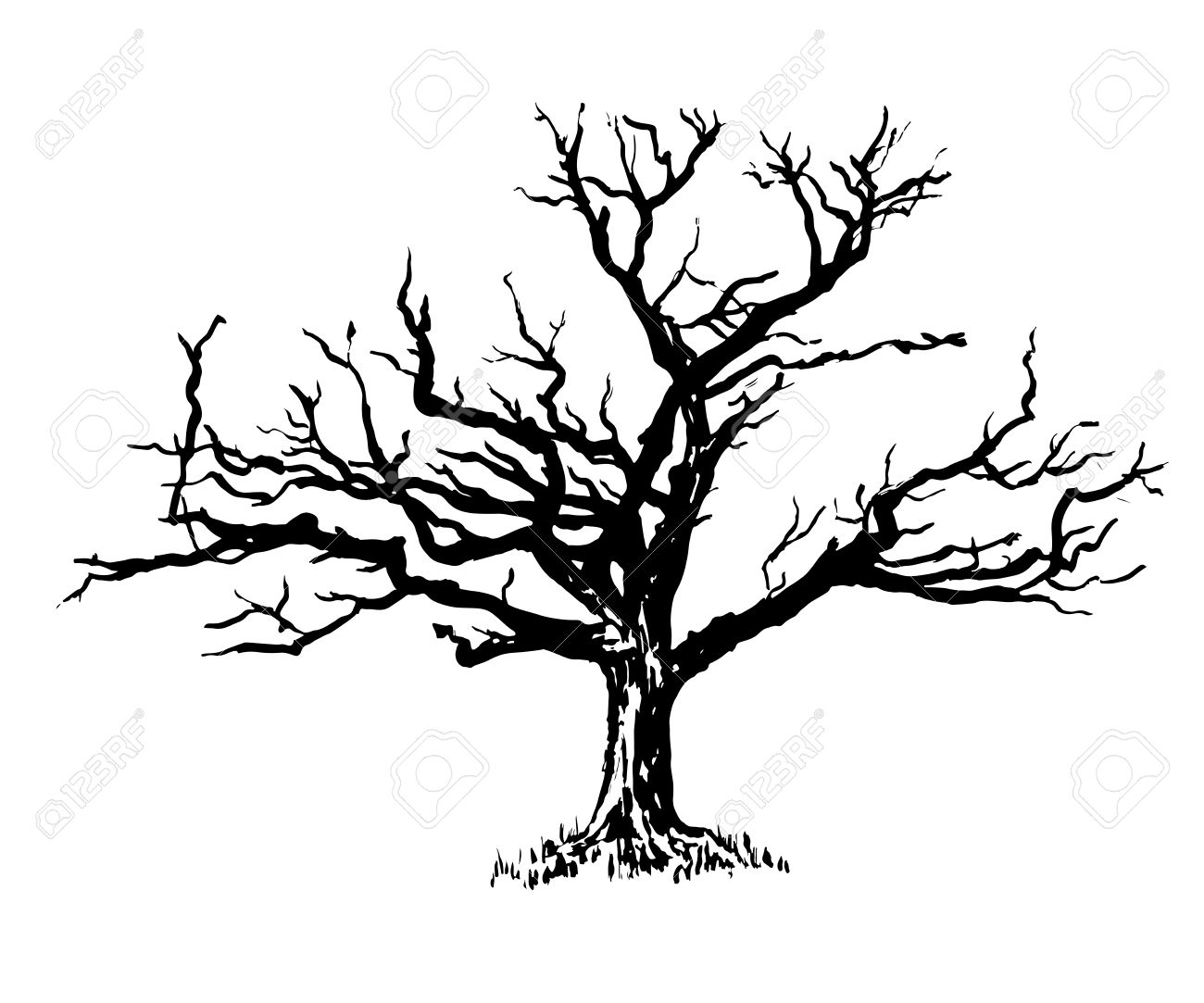 1300x1083 Drawold Sprawling Dry Tree Graphic Illustration Royalty Free