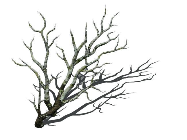 650x487 Dry Tree Branch Dry Tree Branch Orange Tree Dry Branches