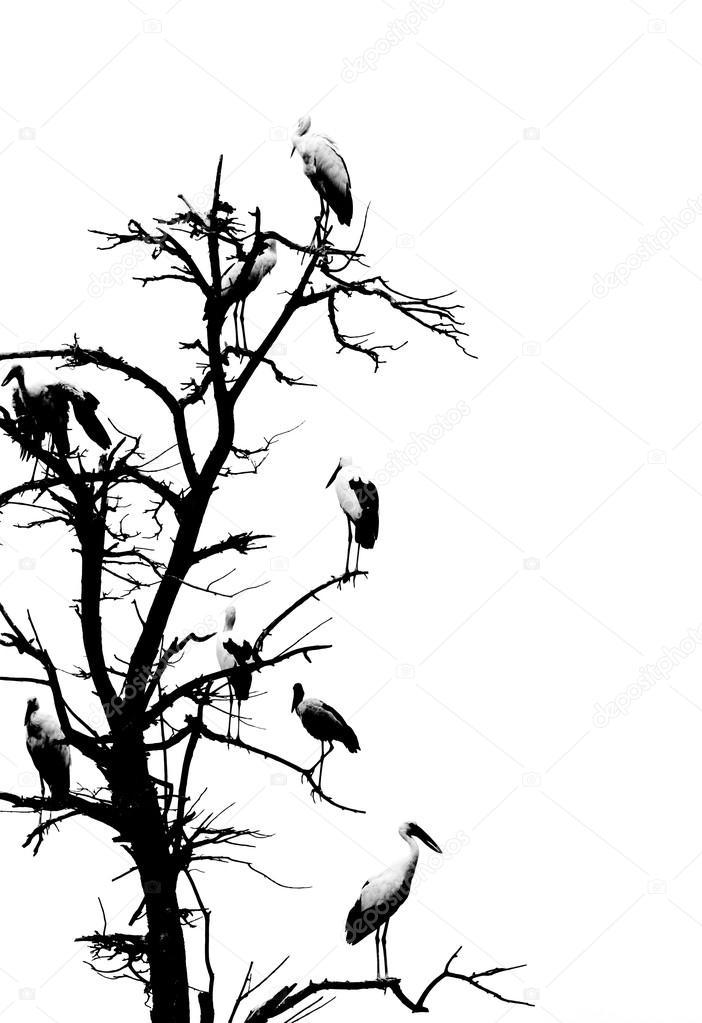 702x1023 Dry Tree And Birds Stock Photo Deerphoto
