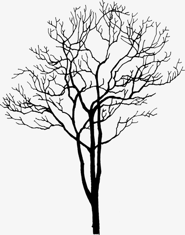 650x825 Dry Trees, Trees, Park, Withered Png Image For Free Download