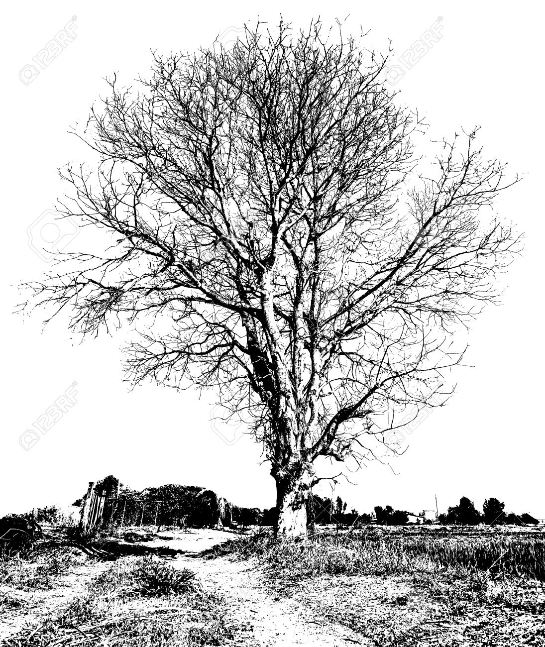 1095x1300 Black And White Drawing Of A Dry Tree Without Leaves, Which Is
