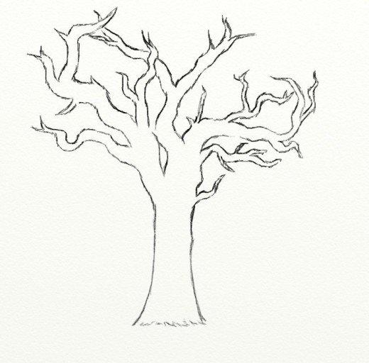 520x512 Photos Dead Tree Sketch,