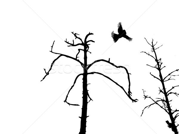600x450 Silhouette Dry Tree And Birds Isolated On White Background Vector