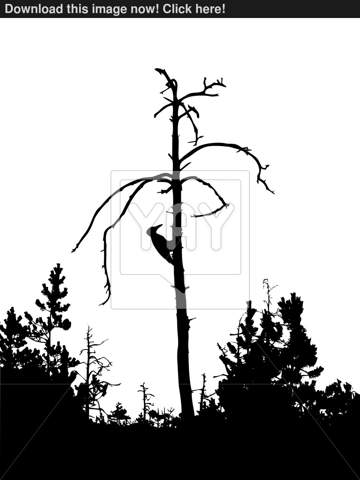 1200x1600 Vector Silhouette Woodpecker On Dry Tree Isolated On White Back