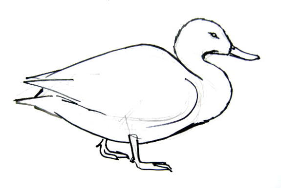 575x386 How To Draw A Duck
