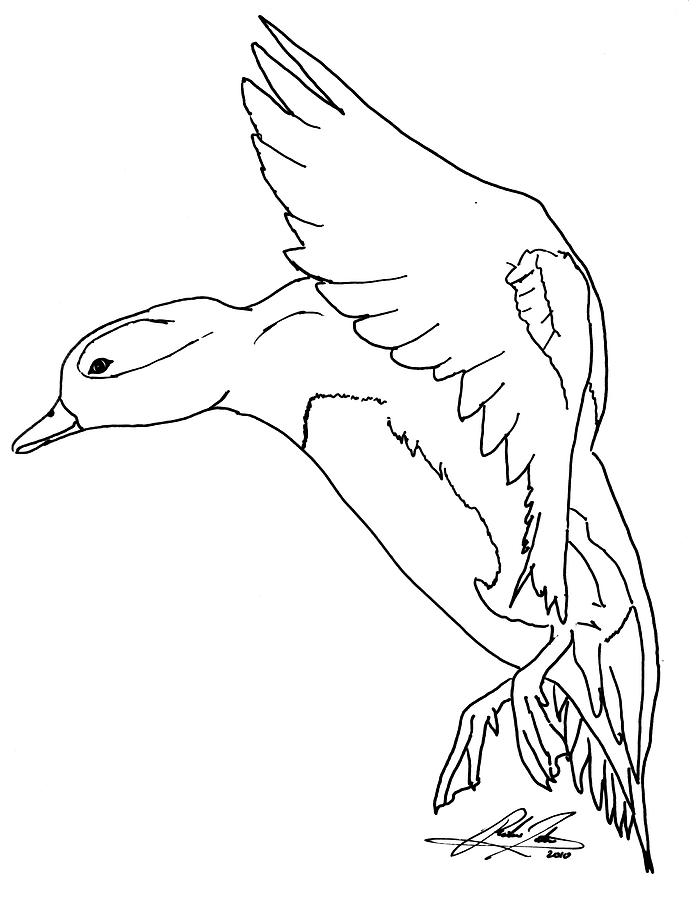 696x900 Landing Duck Outline Drawing By Richie Tatum