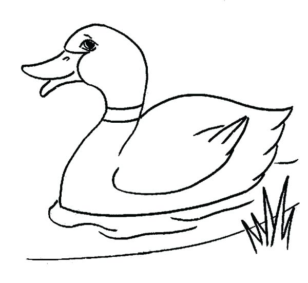 600x551 Coloring Pages Ducks Baby Duck Coloring Page Coloring Pages Ducks