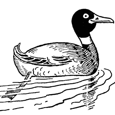 400x400 How To Draw Ducks With Easy Step By Step Drawing Tutorial