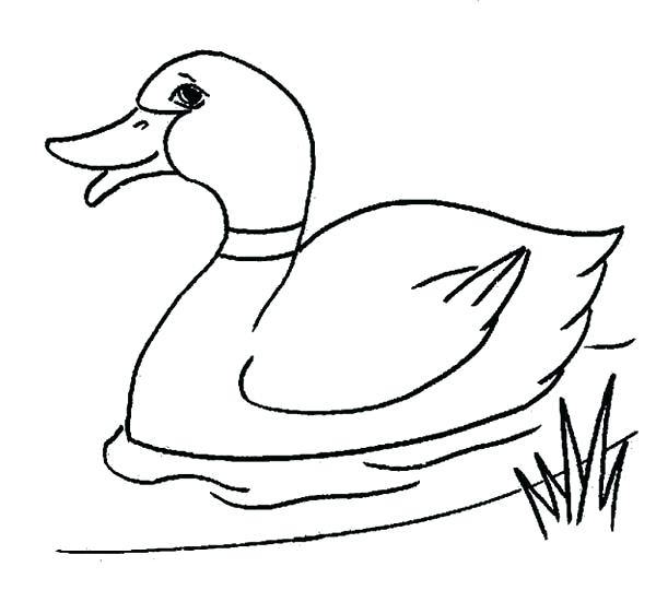 600x551 Ducks Coloring Pages Botcompass.co