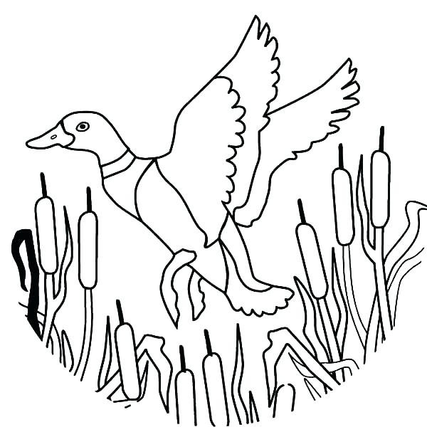 600x600 Coloring Pages Ducks How To Draw Flying