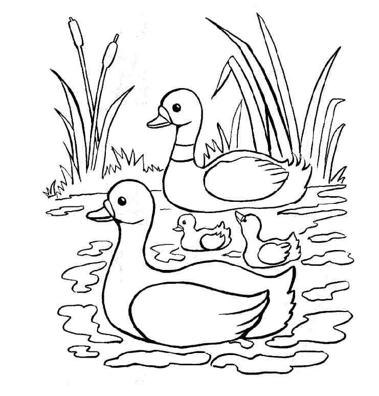 600x551 Duck Coloring Pages Nursery Room 741x773 Drawings For Kids