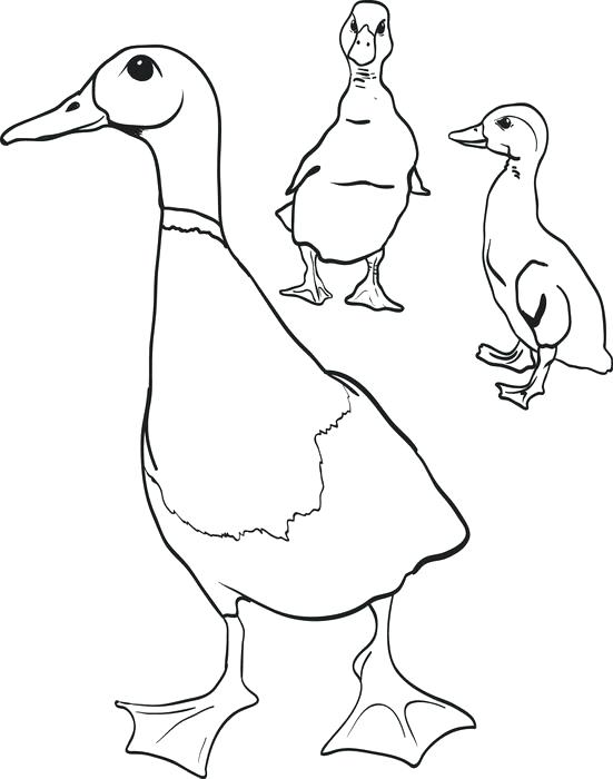 551x700 Coloring Page Of A Duck Printable For Kids