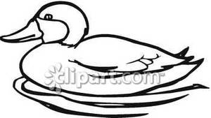 300x169 Duck Outline