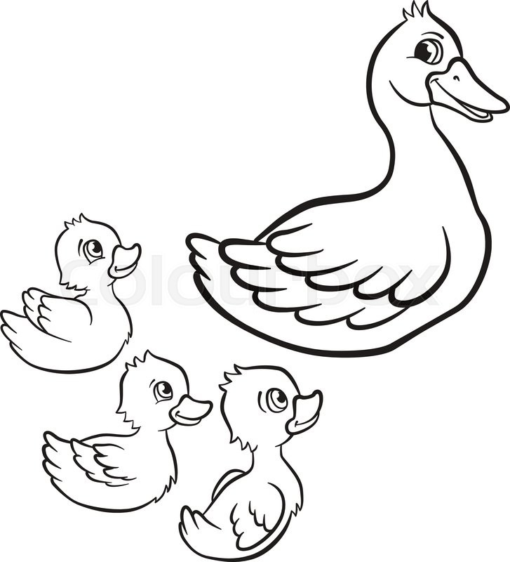 727x800 Coloring Pages Kind Duck And Free Little Cute Ducklings Swim On