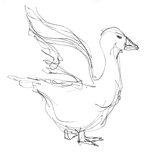 500x500 Duck Gesture Drawing Gesture Drawing Gesture