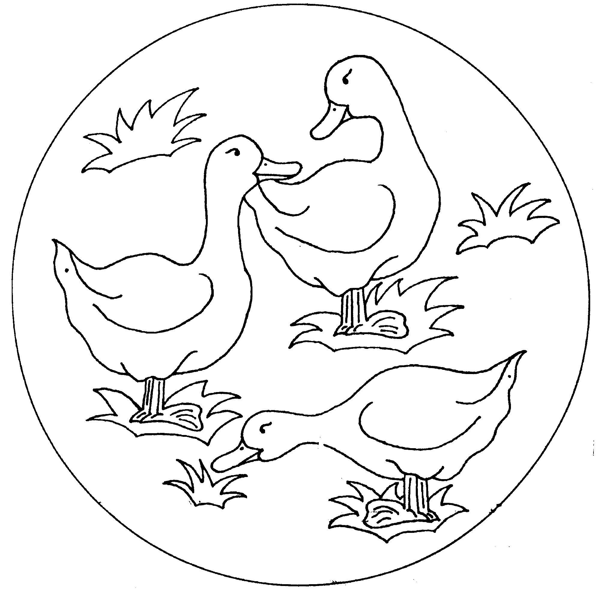 2032x2012 Duck