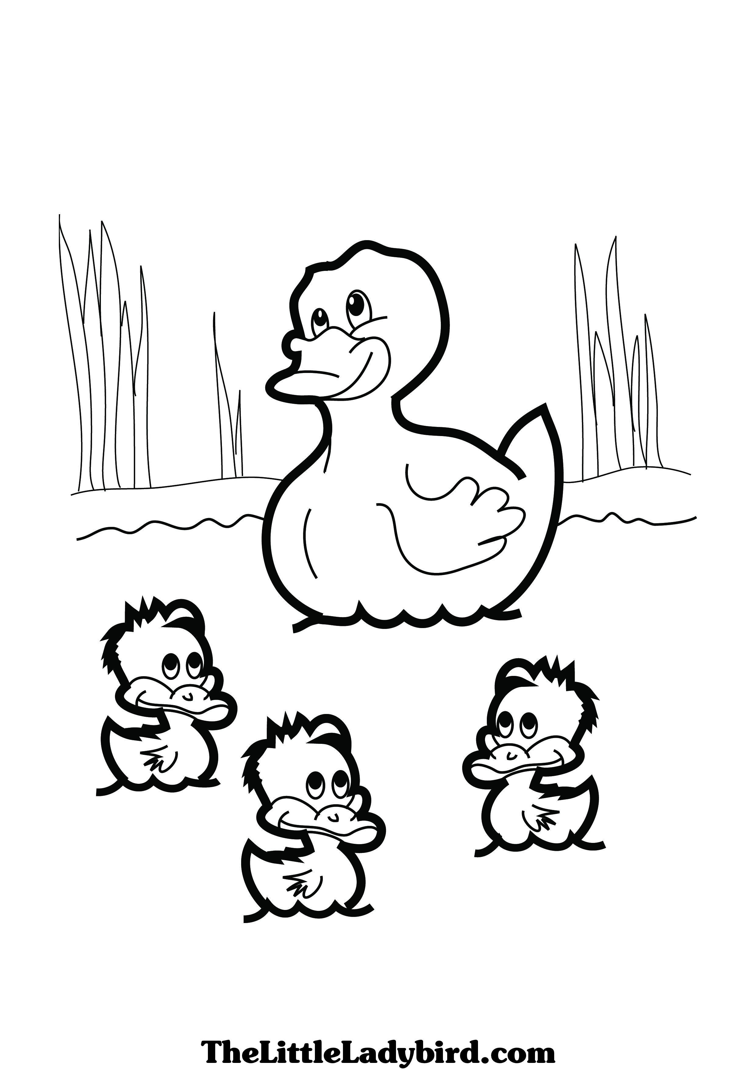2480x3508 Duck Colouring Picture Theme Ducks Pinterest