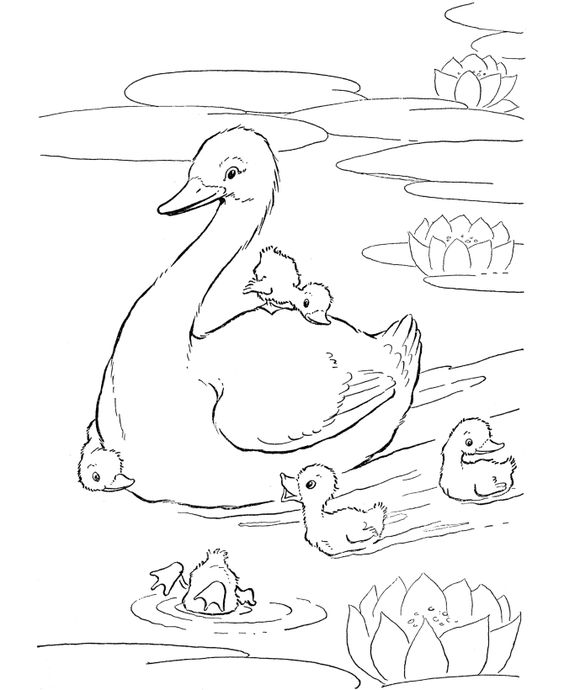 564x690 Farm Animal Coloring Page Ducks Swimming In The Farm Pond