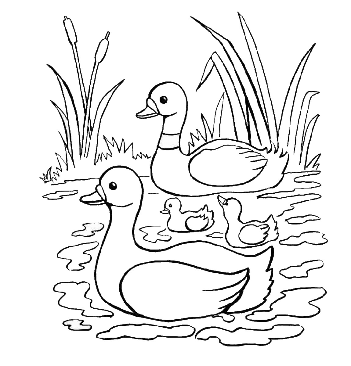 Duck In A Pond Drawing at GetDrawings.com   Free for personal use ...