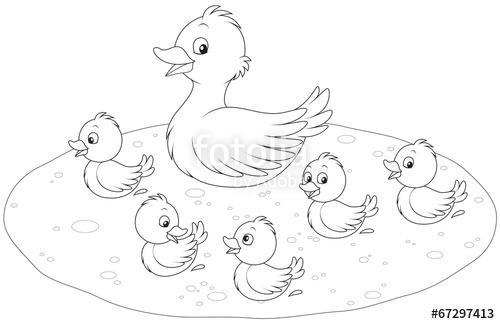 500x324 Duck And Ducklings Stock Image And Royalty Free Vector Files