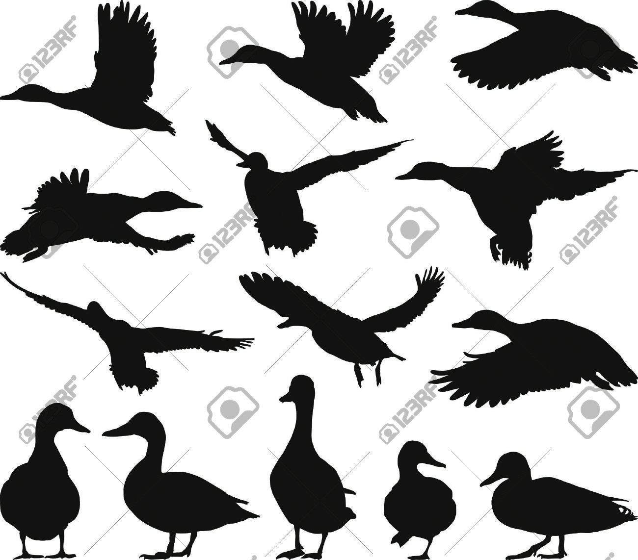 1300x1142 Wood Duck Clipart Duck Outline