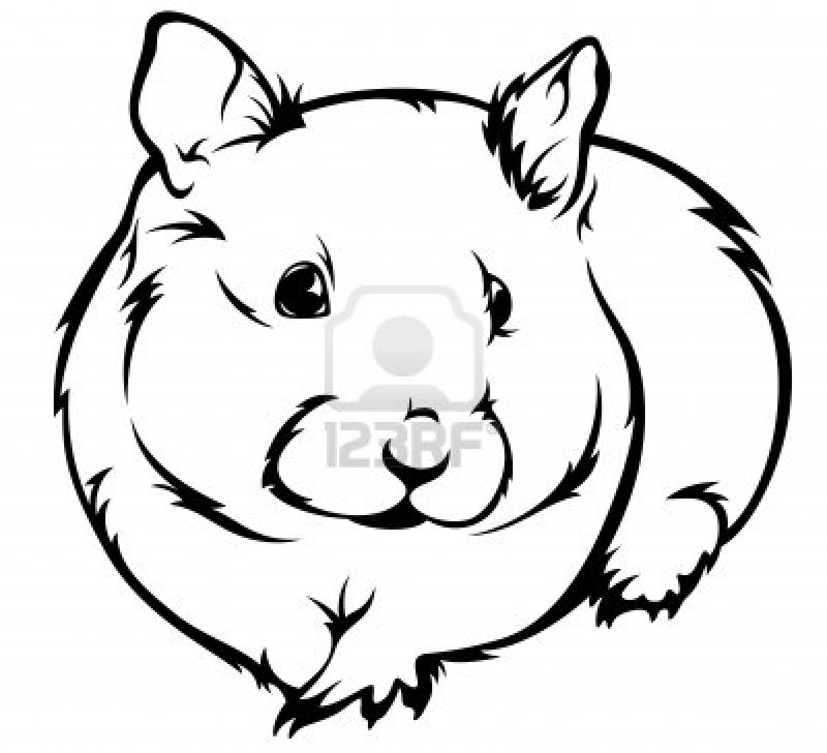 hamster 2 animals printable coloring pages
