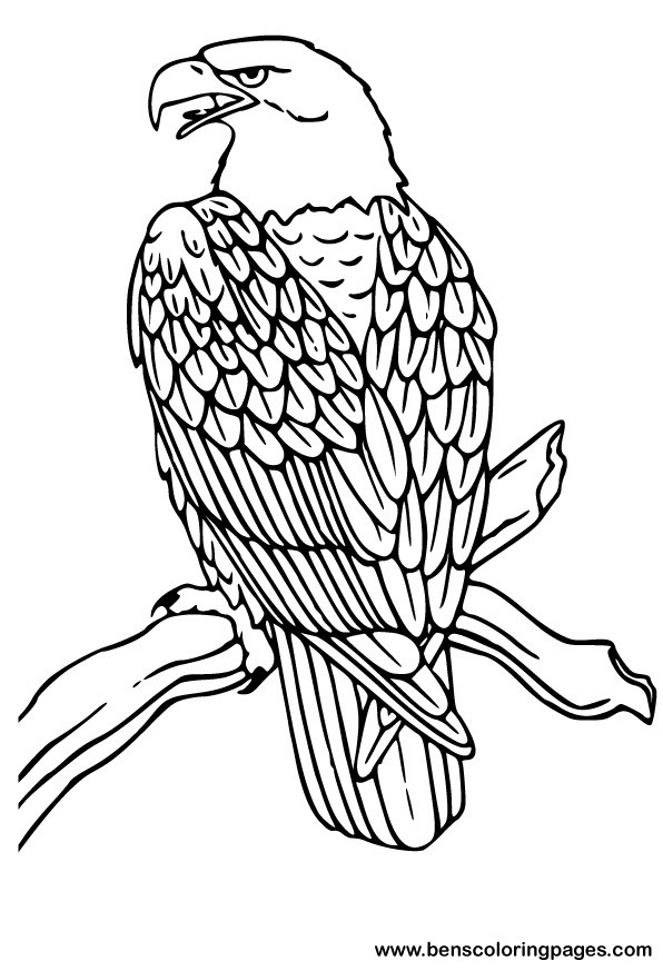 596x873 American Eagle Coloring Pages