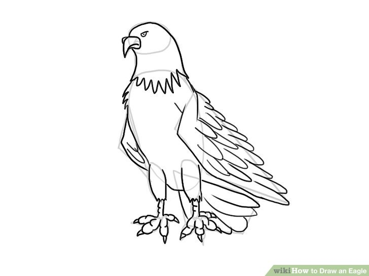 Eagle Black And White Drawing
