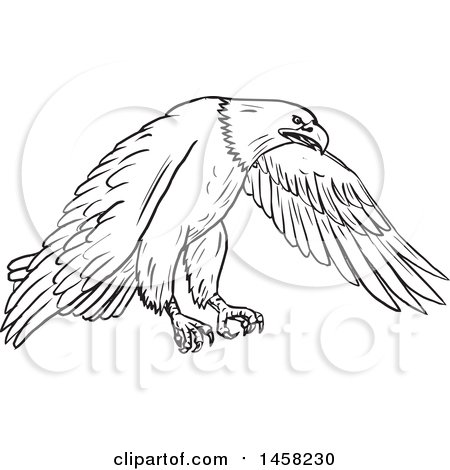 450x470 Clipart Of A Flying Bald Eagle, In Sketched Black And White Style