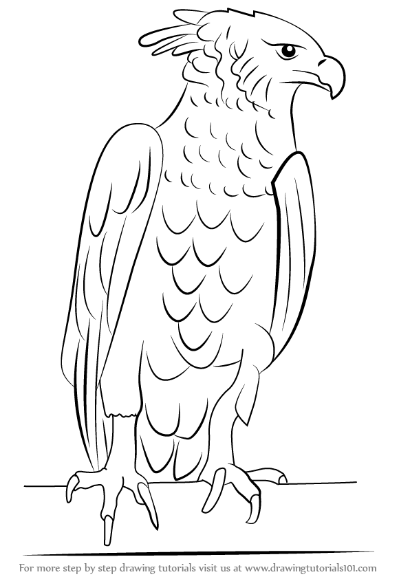 596x842 Learn How To Draw A Harpy Eagle (Bird Of Prey) Step By Step